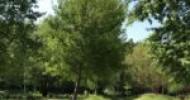 Le 5 città capoluogo rimandate sulla gestione del verde urbano