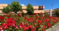 QS World University Rankings 2022. UNISA si conferma tra le prime 1000 università del mondo