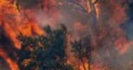 Incendi Campania maglia nera, anticipazione dati Ecomafia 2021 di Legambiente